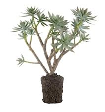 Flora succulent H47 cm