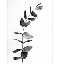 Harmony in black poster - 50x70