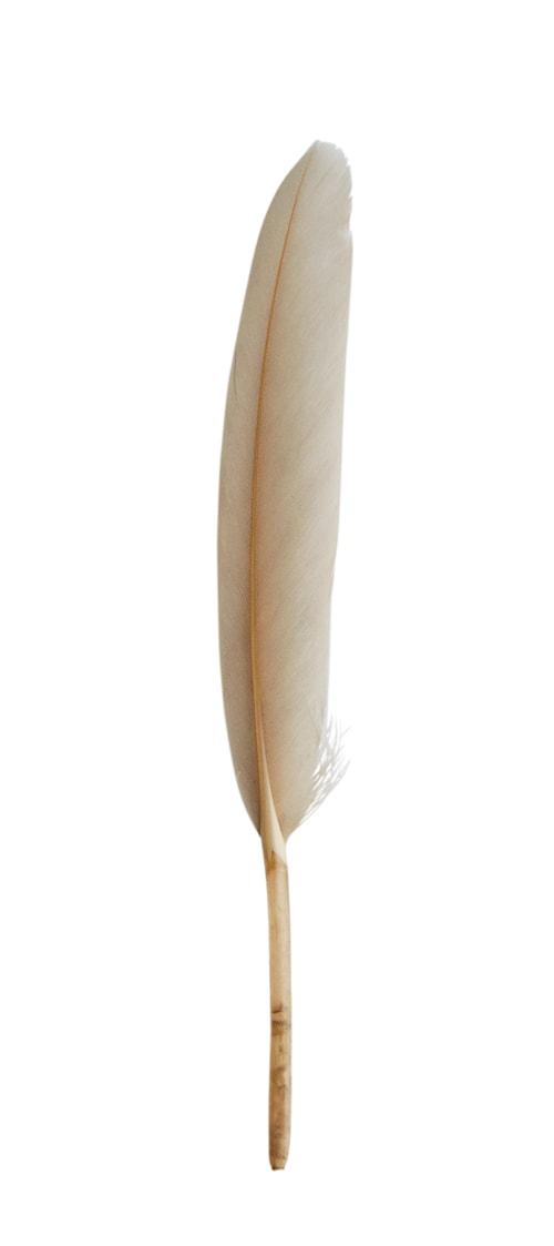 Fjærdekorasjon 15 cm - Grå