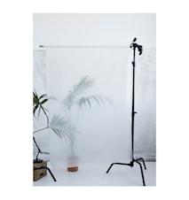 Botanic Poster - Palm l