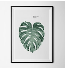 Plant monstera poster