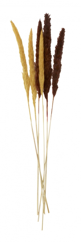 REED Blomst Mørk rød/oransje 6 stk